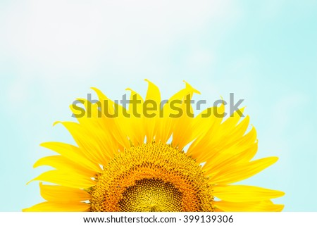 Close up Sunflower - stock photo