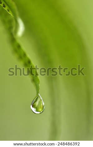 close up super macro shot water drop on plan in fresh natural concept close up  macro the fresh white orchids  natural concept  - stock photo