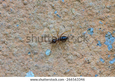 close up Termites eating the house on wall - stock photo