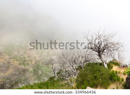 Close up terrible dead trees in fog - stock photo