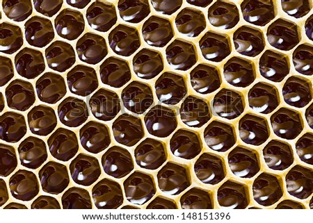 close-up texture of a honeycomb with honey