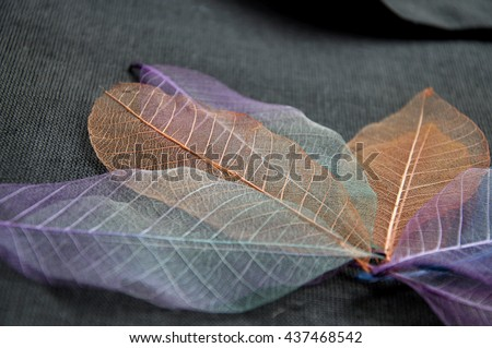 Close up texture of colorful skeleton leaves - stock photo