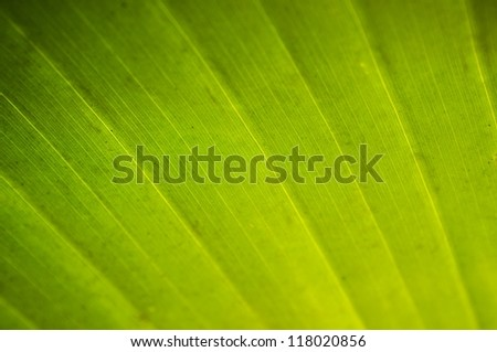 Close-up texture of palm leaf - stock photo