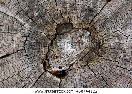 Close up timber texture cracked