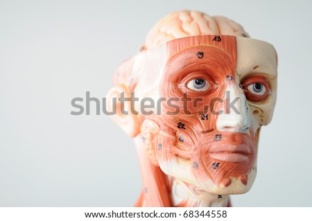 close up to face anantomy - stock photo