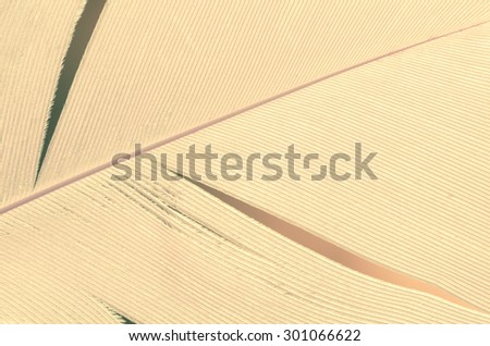 close up to white feather - stock photo