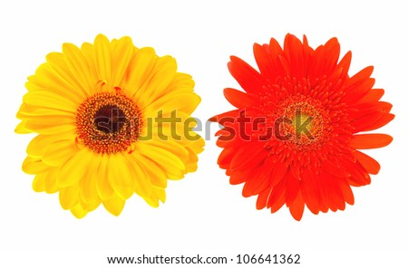 Close-up two daisy flowers isolated on white background - stock photo