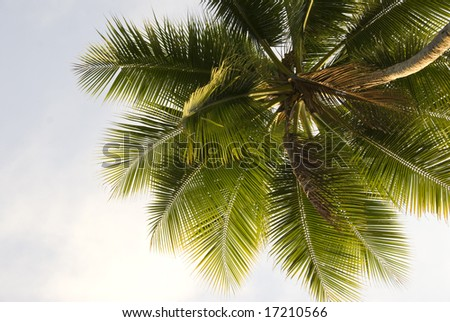 Close up upward view of a lone palm tree against the sky background - stock photo