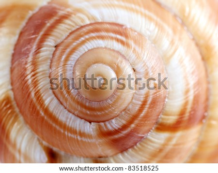 Close up vie of a spiral shell texture - stock photo