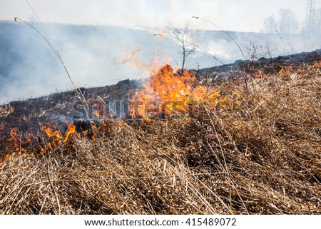 Close up view at dry grass burning in forest fire - stock photo