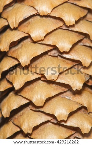 Close-up view of a cedar husk. Can be used as texture or background - stock photo