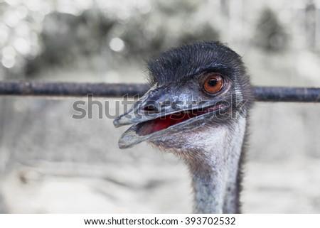 Close up view of an ostrich bird head - stock photo