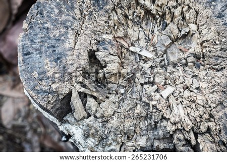 close up view of an weathered old driftwood stump that cracks spreading from the center - stock photo