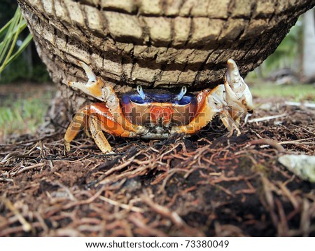 Pin Coconut Crab Recipe This Is Your Indexhtml Page Cake on Pinterest