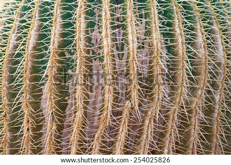 Close-up view of cactus texture.