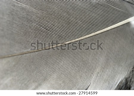 close up view of feather - stock photo