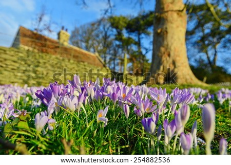 Close-up View of Flowers Blooming in a Beautiful Garden in Early Spring - stock photo