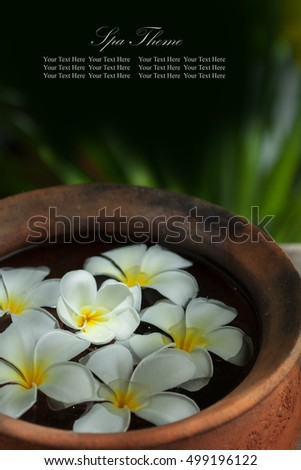 close up view of   frangipani  flowers in pot  on color back