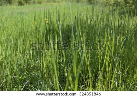 Close up view of fresh green grass of meadow at sunny summer day - stock photo