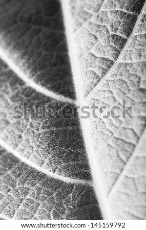 close up view of fresh green leaf texture
