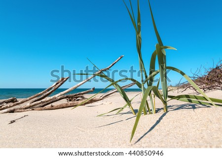 Close-up view of green grass stems on the sandy beach and a dried snag on the background - stock photo