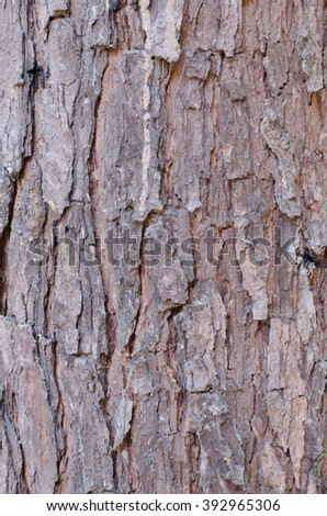 Close up view of highly detailed tree bark texture. Nature wood background