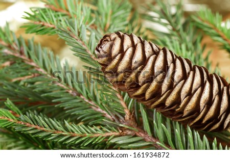 Close up view of pinecone with green tree  - stock photo