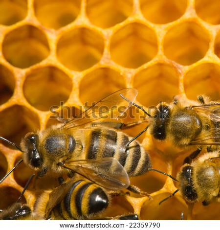 Close up view of the bees on honey - stock photo