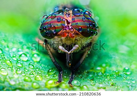 Close up view of the eyes a Tabanus abdominalis horsefly with ra - stock photo