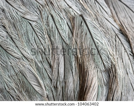 Close-up view of the feathers of an ostrich - stock photo