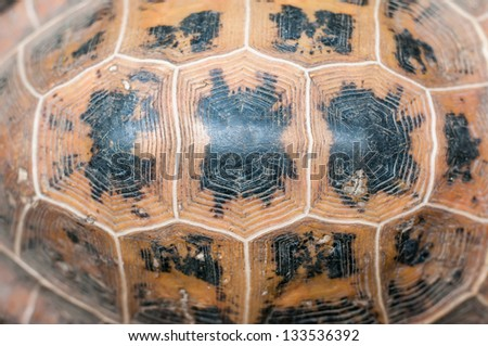 Close up view of the hexagonal texture of a turtle shell. - stock photo