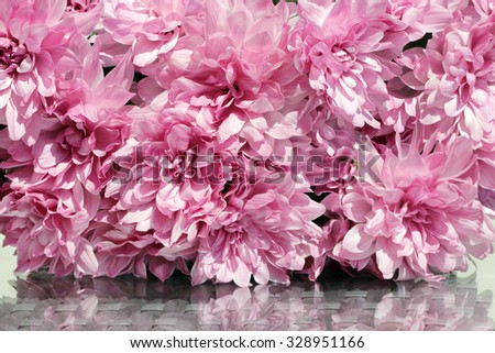 Close up view of the pink asters flowers bouquet at sunny summer day. Suitable for an abstract background. - stock photo