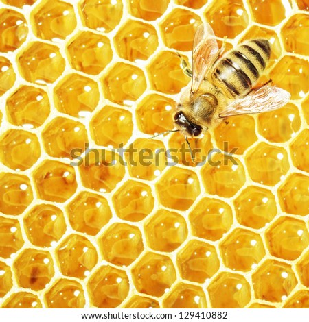 Close up view of the working bee on honey cells - stock photo