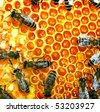 Close-up view of the working bees - stock photo