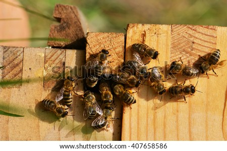 Close up view of the working bees - stock photo