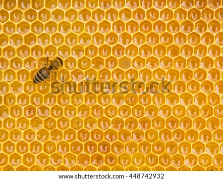 Close up view of the working bees on honey cells, copyspace for text - stock photo