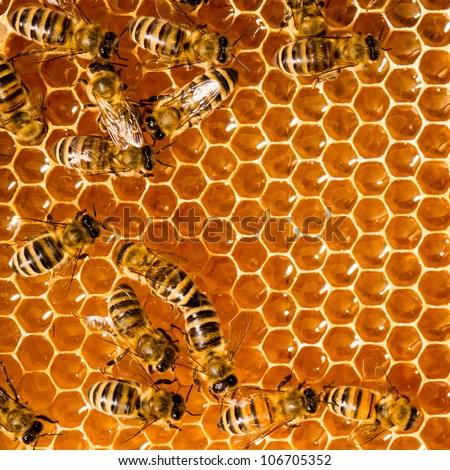Close up view of the working bees on honeycells. - stock photo