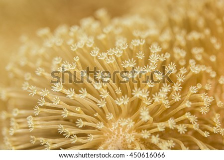 Close up view of Toadstool Mushroom Leather Coral - stock photo