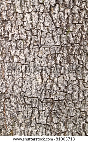 Close up view of tree bark - stock photo