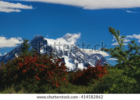 Close-up view of vegetation with breathtaking snowy mountains in the background              - stock photo