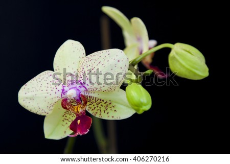 Close up view of white orchid on black background