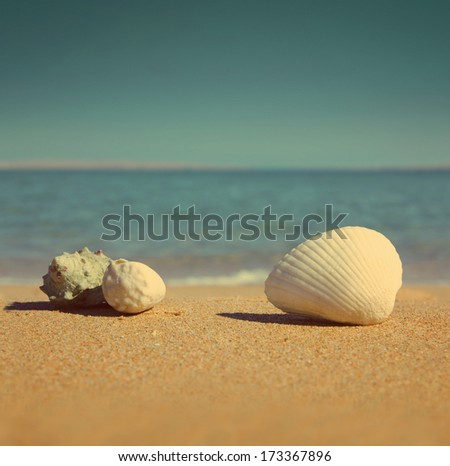 close-up view on seashells on beach - vintage retro style - stock photo