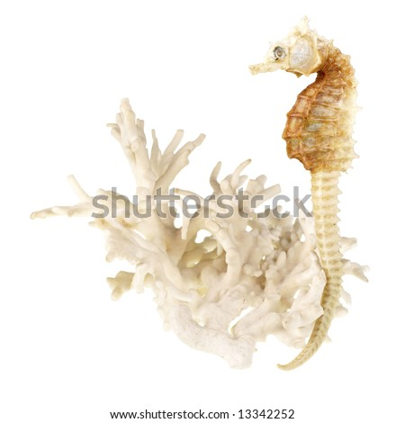 Close up view to corals and sea horse on white background - stock photo