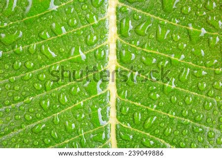 Close up water drop on green leaf
