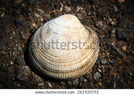 close up white shell skin on dark sand - stock photo