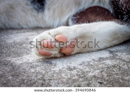 Close up with cat foot, cat feet  - stock photo