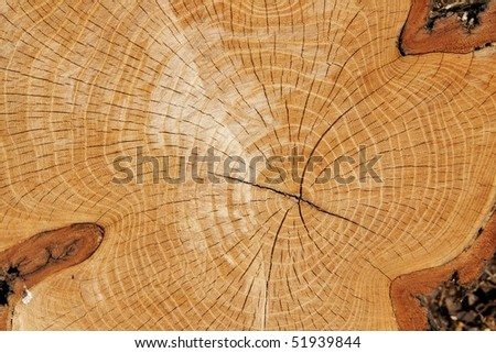 Close-up wooden cut texture.wood background - stock photo