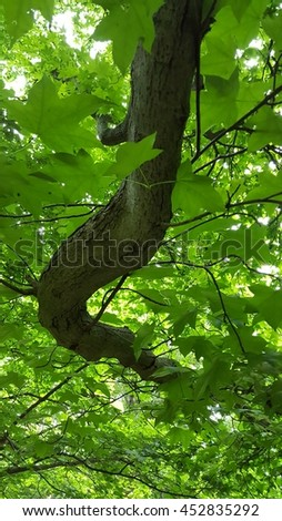 Close view of a branch tree with green leaves - stock photo