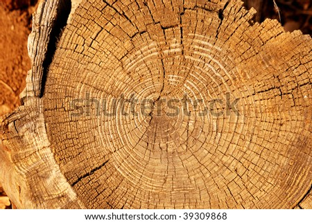 Close view of a tree stump showing growth rings - stock photo
