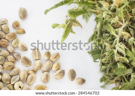 Close view of hemp seeds and dried cannabis twig in a white background - stock photo